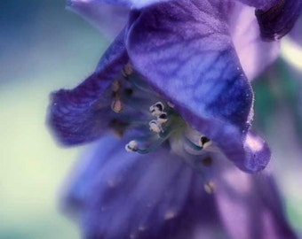 "Flower Photography - purple flower,  blue and purple, a purple flower against blue, flower wall prints, home decor, purple decor - ""sigh"""