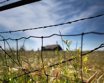 Farmland California, landscape photography. Old barn photograph, hiking, sun, grass, clouds, blue, barbed wire, old fence post, fine art