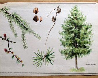 Vintage Pull Down Chart - Old School Poster - Educational Botanical Drawing - Antique School Poster - Vintage Botanical Poster -Tree Drawing