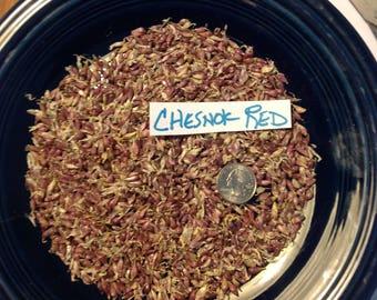 100+ CHESNOK RED Garlic Bulbils/seeds - Hardneck - Standard Purple Stripe type   Organically Grown