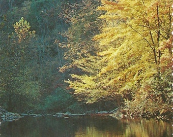 Vintage 1970s Postcard Tennessee Fall Leaves Little River Gorge Great Smoky Mountains National Park Photochrome Era Postally Unused