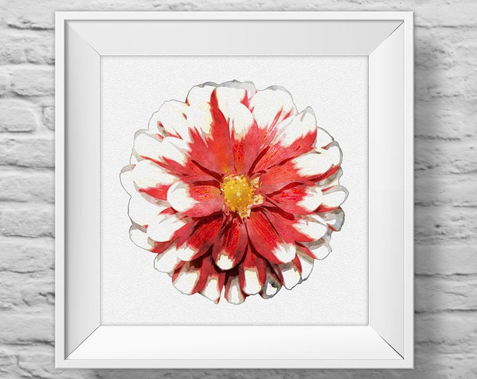 CHRISTMAS FLOWER in RED - unframed square art print, inspirational, nature, floral, watercolor, photography, wall decor. (R&R0125)