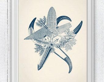 Mixed Blue starfishes - Wall decor poster , sea life print - Haeckel sea life illustration A4 print coastal home decor SAS034
