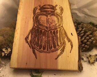 beetle oklahoma cedar laser wood burned plaque