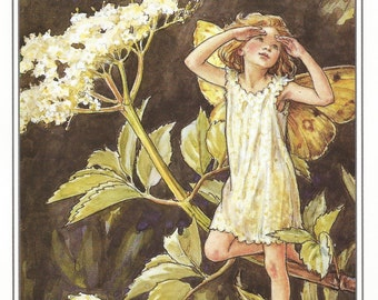 The Elder Fairy Cicely Mary Barker Flower Fairies Vintage Print 1995 Wall Art Nursery Decor Fairy Print Home Decor Print Fine Art