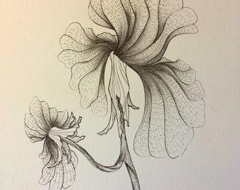 Flower, ink illustration