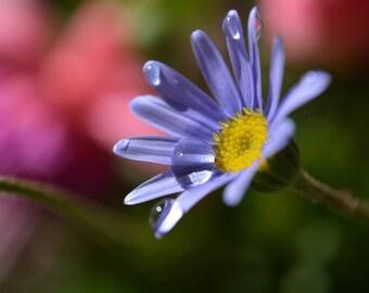 E-card flower - Desktop cover download - Purple daisy flower - blue flower - floral desktop - downloadBlack Friday