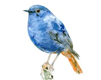 Plumbeous Water-redstart watercolor painting - bird watercolor painting - 5x7 inch print - 0077