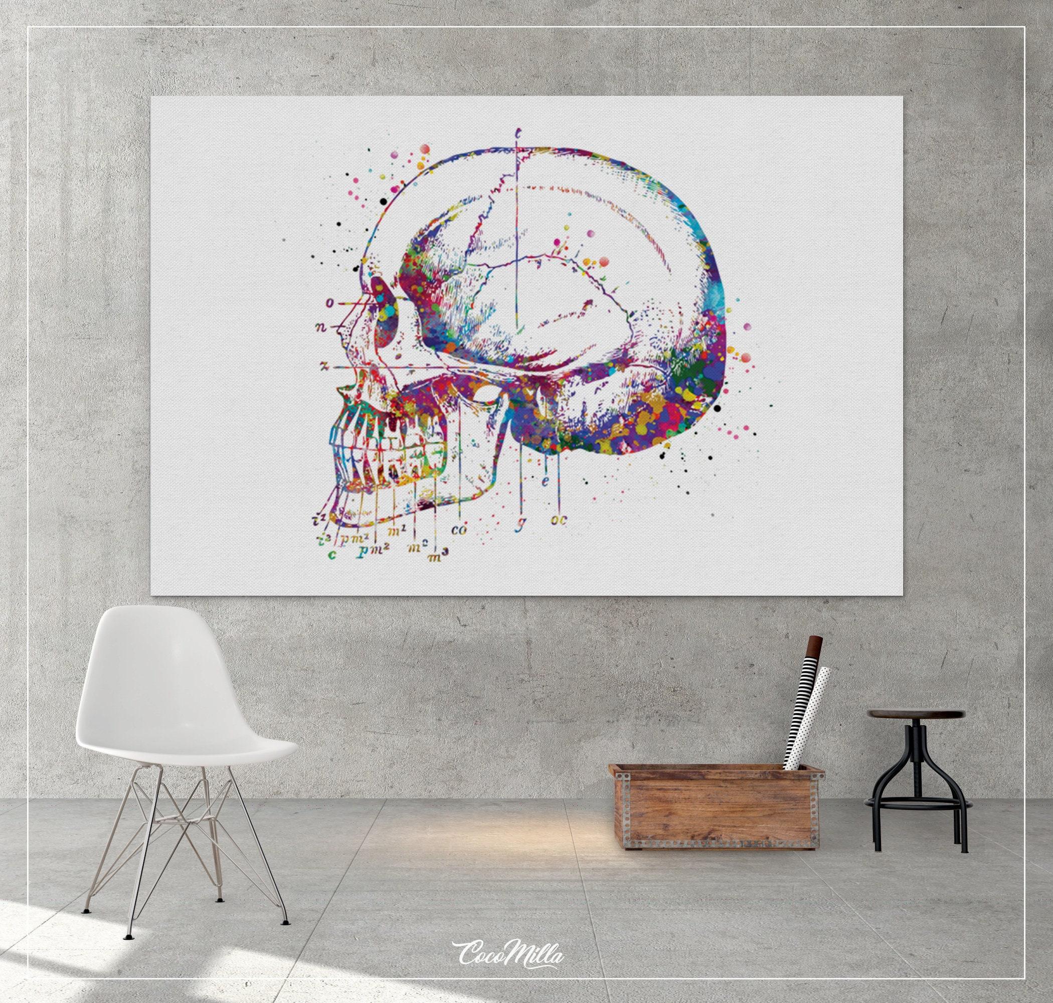 Niedlich Anatomie Des Menschen Für Medizinstudenten Fotos - Anatomie ...