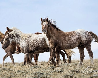 Bronze Warrior and His Family - Fine Art  Horse Photograph - Wild Horse - Adobe Appys - Adobe Town - Fine Art Print