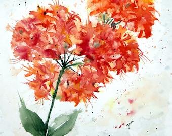 PRINT (8x10) of  Orange Azalea Watercolor Painting, azalea Painting, Watercolor azalea