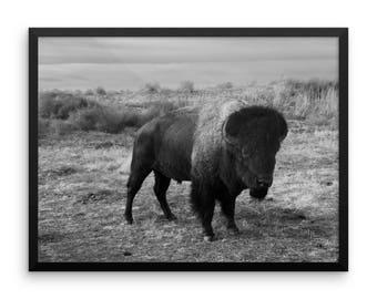 LowBeeTees Framed Buffalo Print