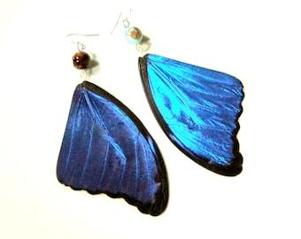 Big Blue Butterfly Earrings, Butterfly Wing Earrings, Real Morpho Didius Butterfly Wing Earrings