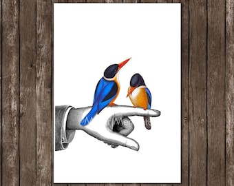 FATHERS Day Gift - blue bird art print - for DAD. Love Birds illustration, anatomical poster, fathers day art