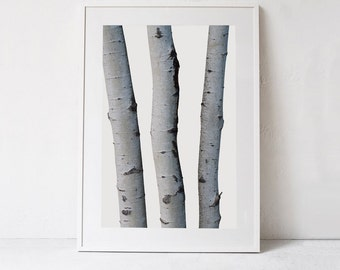 Black and White Wall Art Print, Modern Rustic Wall Decor, Silver Birch Tree Print Nordic Digital Print Download Large Wall Art Printable Art