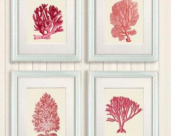 Coral print - Set 4 Red Coral Art Prints Nautical Print coral home decor coral wall art coral decor red art print red room decor coastal art
