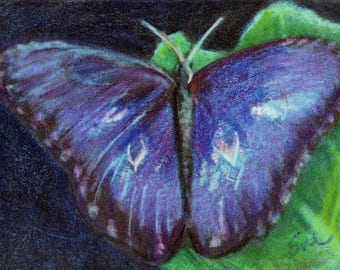 original art  aceo drawing blue butterfly