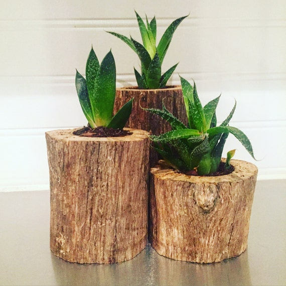 Succulent Driftwood Planters
