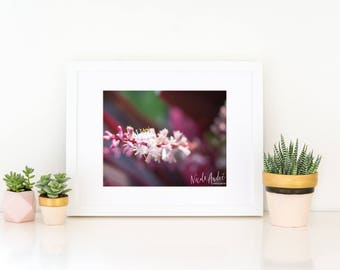 Blooming Orchid, Fine Art Print - National Orchid Garden, Singapore