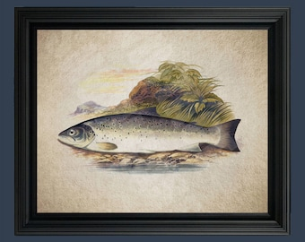 Vintage Trout Fish Illustration - Fish Art - Trout art - Fish Illustration - Trout - Vintage Trout- Trout Fishing- Fishing Art #C-032