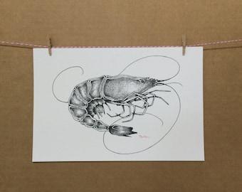 Watercolor/Ink-Animal-Shrimp (B& W)