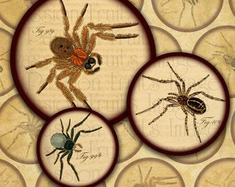 Antique Arachnids- Spider Digital Collage Sheet 2 inch circles-- Instant Download