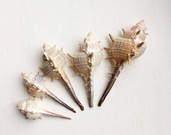 Coastal decor spiky murex shells beach home natural decor