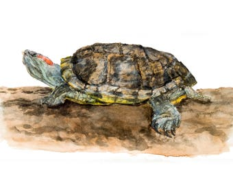 Red Eared Slider Turtle Giclee Fine Art Print from an original watercolor painting by artist Joy Neasley