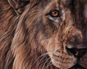 EYES OF AFRICA...Lion