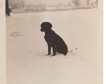 Black Puppy in the Snow - Original Vintage Snapshot