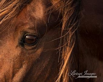 Waverunner's Eye - Fine Art Wild Horse Photograph - Wild Horse - Fine Art Print