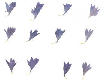 Pressed flowers, blue cornflower 20pcs for floral art craft card making scrapbooking
