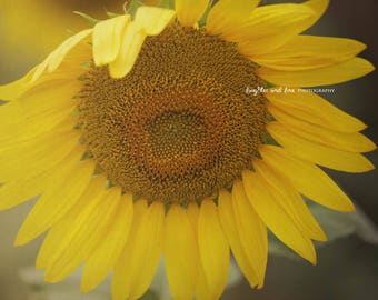 Sunflower Photo, Yellow Flower Floral Picture, Rustic Farmhouse Floral Decor, Country Livingroom Bedroom Home Decor Wall Art
