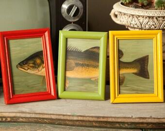 4x6 Fish Bass Prints in Wood Frames - cabin decor