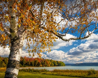 Autumn White Birch Tree on the shore of Glen Lake near Sleeping Bear Dunes Michigan No.9317 -  A Fine Art Fall Landscape Photograph