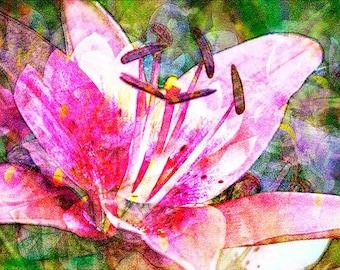 Flowers 1.4 Photo Art
