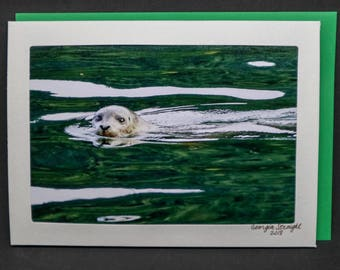 Harbour Seal blank photo card