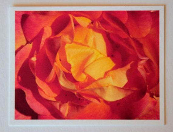 Rose, orange, ruffles, flowers, note card, blank fine art greeting card, flower photo, red, single card, photo greeting card, garden, nature