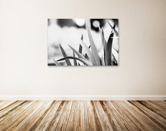 "Black and White Canvas Art, Black and White Nature Photography, Botanical Art, Nature Wall Decor, Large Canvas Art - ""Gentle"""