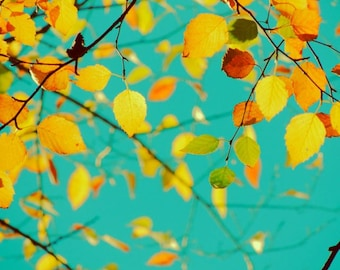 Happy Autumn  Photograph - Fall Foliage - Nature Art - Happy Color - Wall Decor - Autumn Tree Art - Autumn Leaves - Nature Photograph