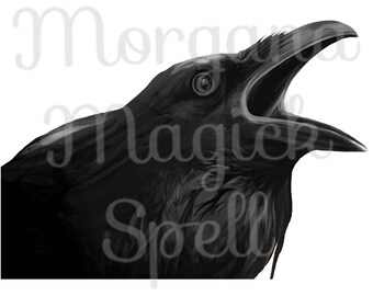 RAVEN  Royalty Free Clip Art Illustration Wiccan Digital Image Download Printable Graphic Clip Art Transfers Prints HQ 300dpi jpg png