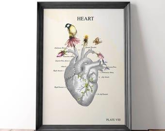 Anatomical Heart Art Print Anatomy Art Print Watercolor Anatomy Artwork Medical Student Graduation Gift for Nurse Graduation Gift Doctor