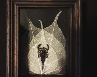 Scorpion Shadow Box with Skeleton Leaves
