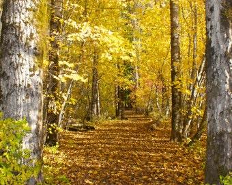 Fall Foliage, Landscape Photography, Nature, Forrest Photo Art Prints, 8 X 10