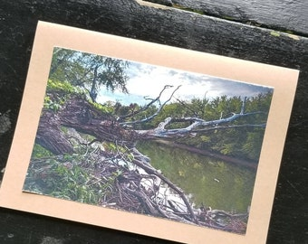 Riverbank Driftwood - Blank Greeting Cards