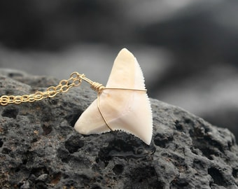 Le collier de Koa, grande courbe collier dent de requin moderne, collier de dent de requin véritable, collier de dent de requin or, surfeur Mano guerrier