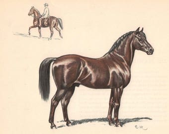 The Morgan Horse Color  Print by Edwin Megargee - Book Plate - Morgan Horse with Rider Vintage Wall Hanging