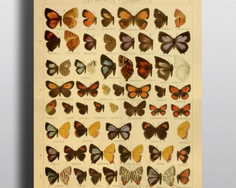 Antique 1800s Butterfly Science Chart Poster Art Print Illustration Scientific Chart Nature Wall Art Wall Decor Taxidermy
