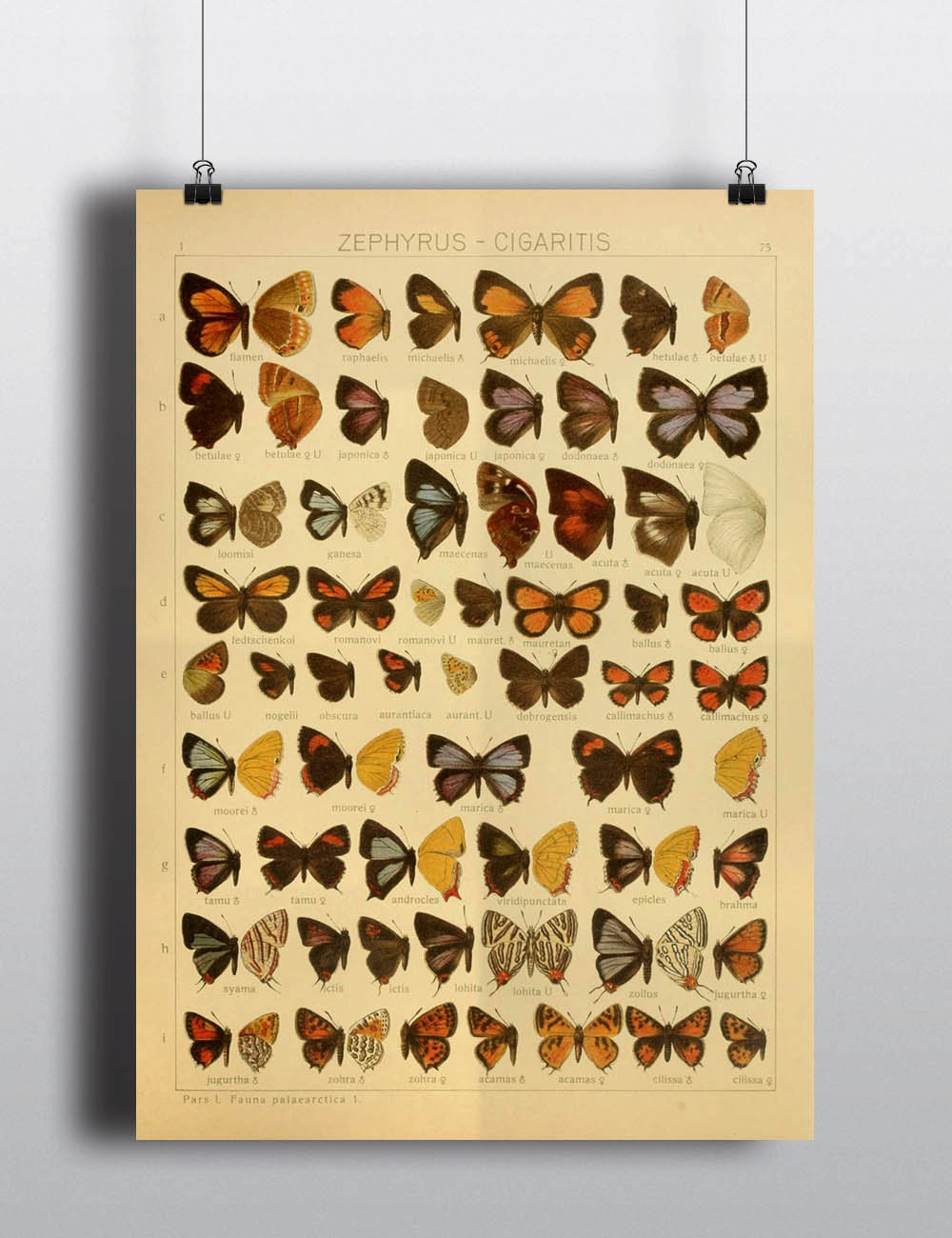Antique 1800s Butterfly Science Chart Poster Art Print