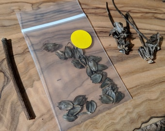 Cup Plant Seeds
